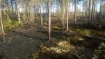 Metsäpalon jälkiä nuotion ympäristössä